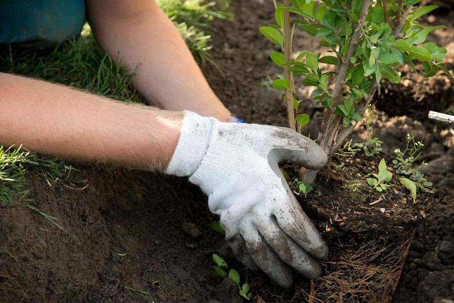 посадка деревьев в саду
