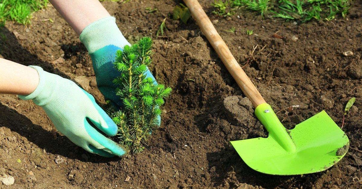 уход и посадка деревьев