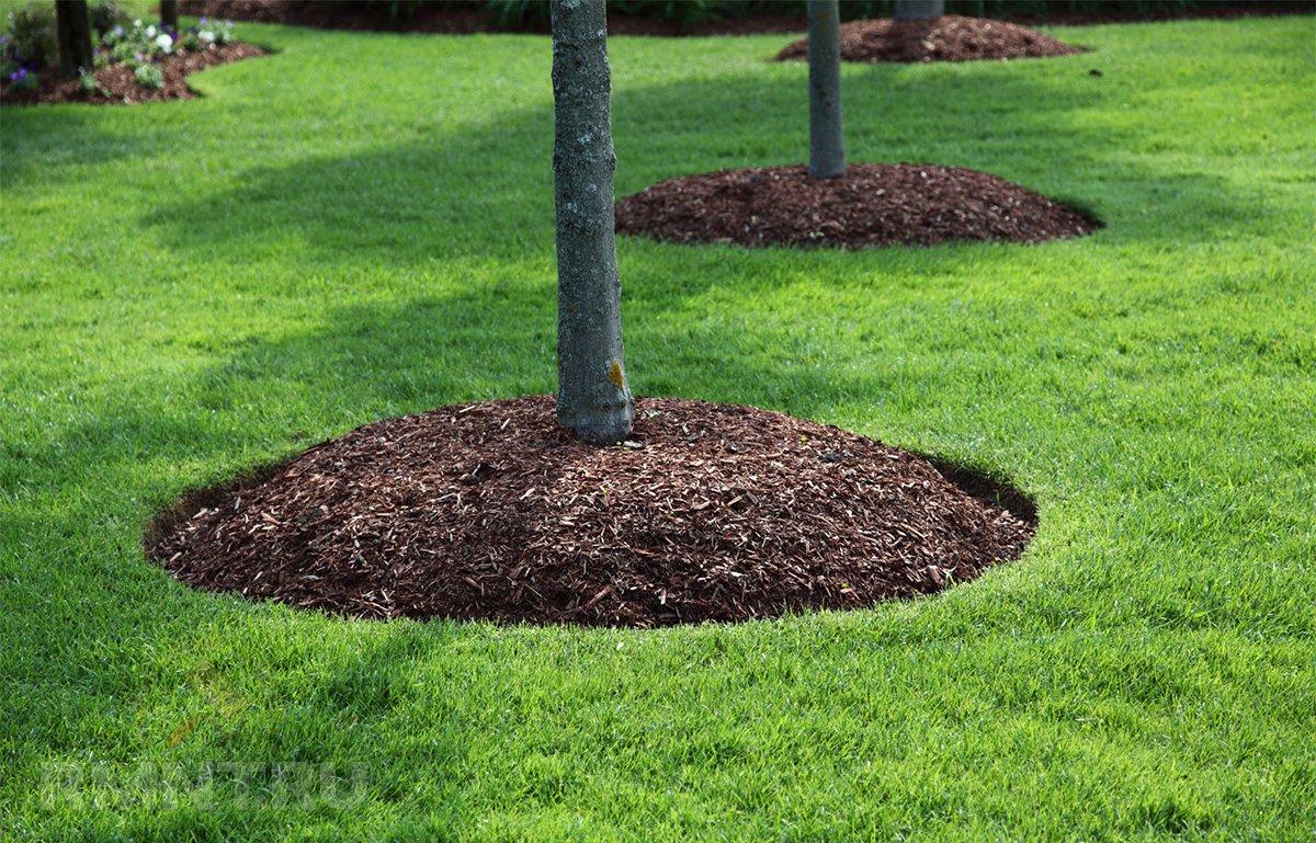 организация посадки деревьев